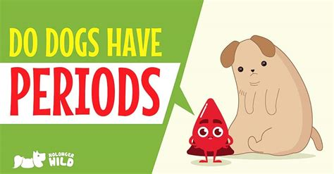 do dogs periods do dogs periods these facts will you nolongerwild