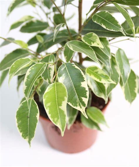 come curare le piante da appartamento 10 piante da appartamento facili da curare