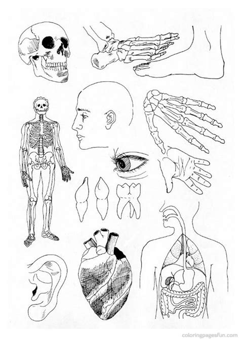 Anatomy Coloring Pages Bestofcoloring Com Human Anatomy Coloring Page