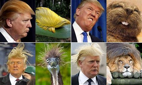 donald doll uk donald s hair raising doubles from emus to trolls