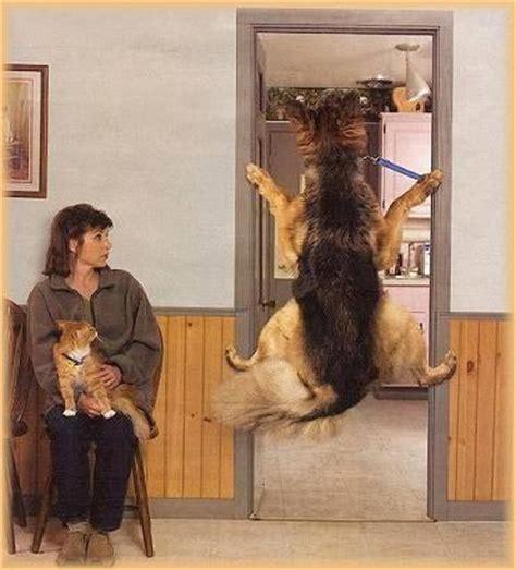 hund leckt sofa ab zum schmunzeln