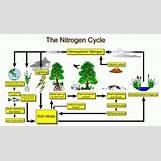 Oxygen And Carbon Dioxide Cycle Simple   736 x 420 jpeg 54kB