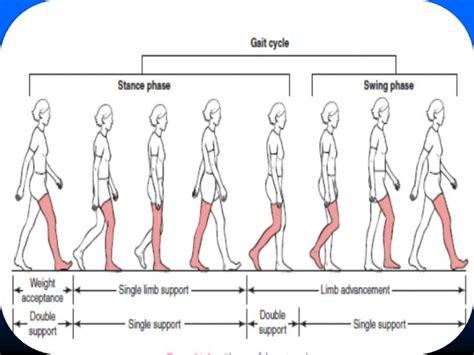swing gait human gait