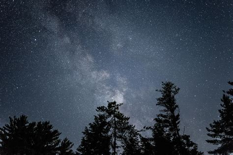 night sky starry night forest wallpaper  background