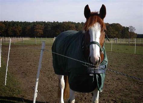 decke pferd kaufberatung pferdedecken