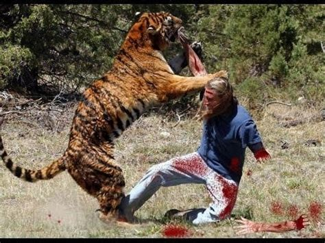 lion vs human in a real fight youtube