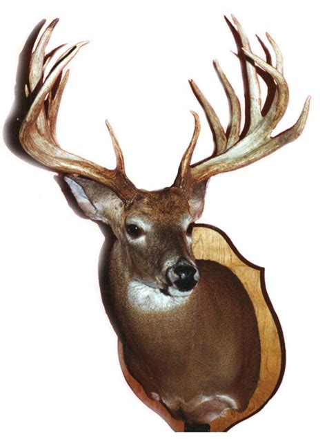 Alabama Records Alabama Whitetail Records