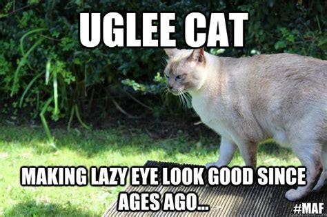 Ugly Cat Meme - uglee cat making lazy eye look good since ages ago maf