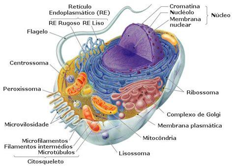 fotos de celulas animais clulas simbiotica org