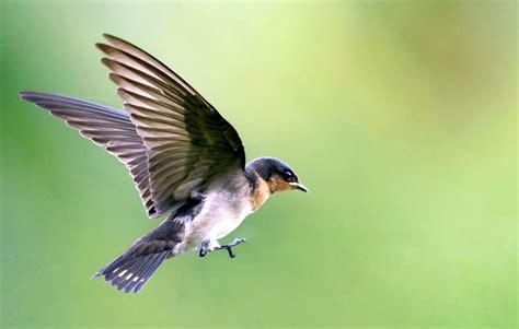 what do backyard birds eat 10 backyard birds you should attract to your garden hello