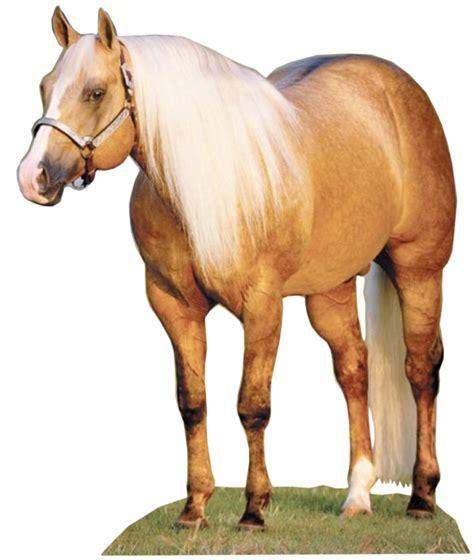 caballos sementales cuarto milla caballos cuarto de milla