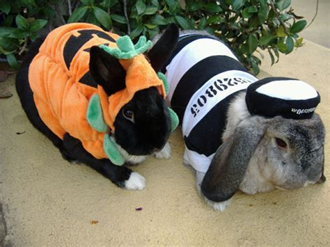 halloween costumes for bunnies halloween pets shining garnet s xanga site