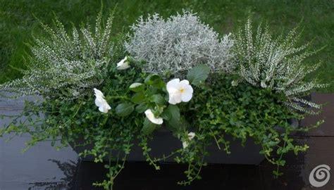 fioriere per davanzali le fioriere invernali per il balcone e il davanzale casa