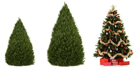 here s how to prolong the christmas tree s life