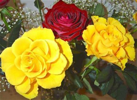 imagenes de rosas mas bellas del mundo im 225 genes de flores hermosas imagen de rosas rojas