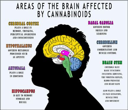 cannabis for alzheimer`s – does it really work? – mmj doctor