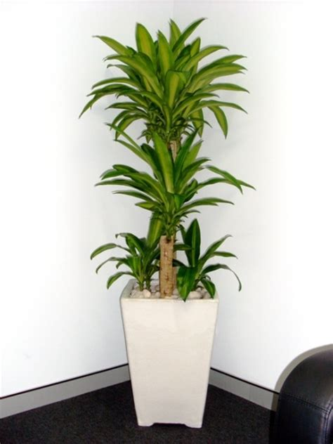 Indoor Floor Planters by Floor Standing Planters Perfection Plant Hire