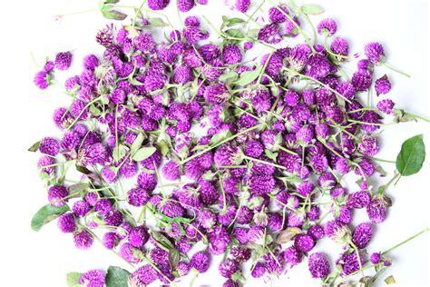 fiore lillà immagini ramo fiore viola petalo erba lilla