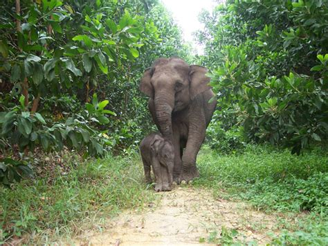 google images elephant wwf eyes on the forest google earth outreach