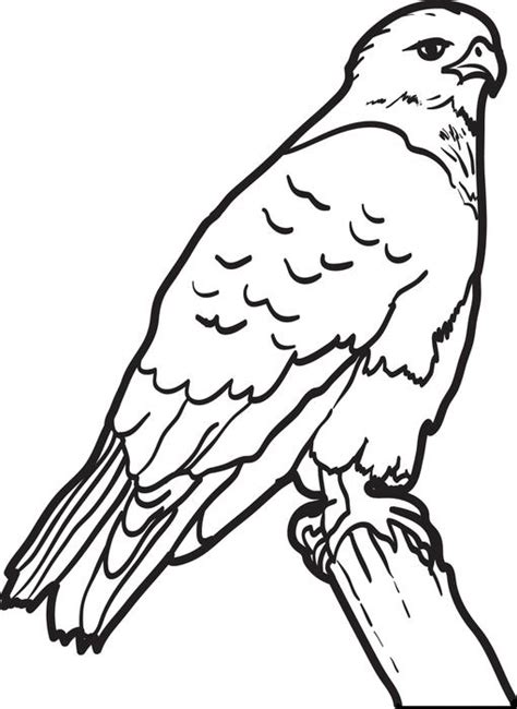 free printable hawk coloring page for kids