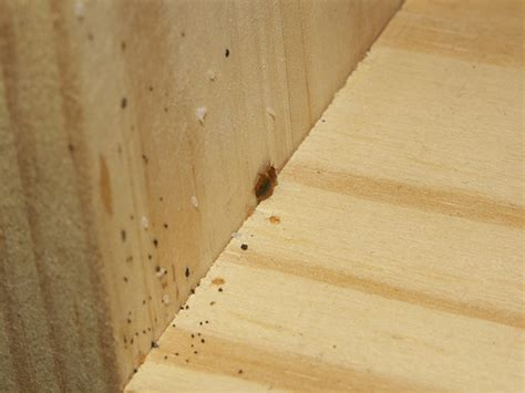 kill fleas hardwood floors signs of cockroach infestation