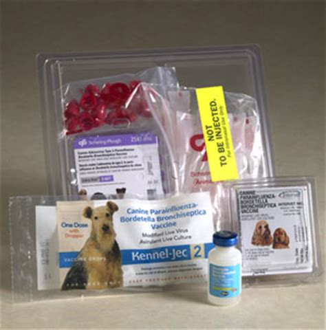 bordetella for dogs canine cough bordetella vaccines for dogs