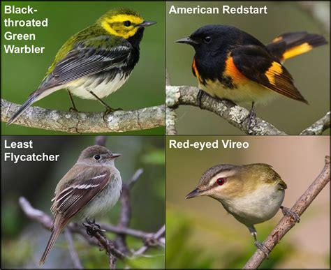 Birds Live On by Bye Bye Birdie Part Ii Data Nuggets