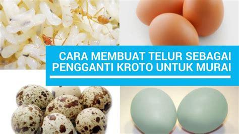cara membuat pengganti oralit cara membuat telur sebagai pengganti kroto dan