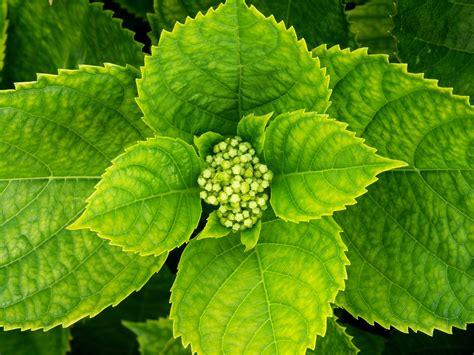 imagenes hojas negras hojas de la planta hojas de planta
