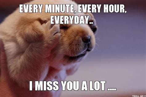 Missing You Meme - i miss you animal memes www pixshark com images