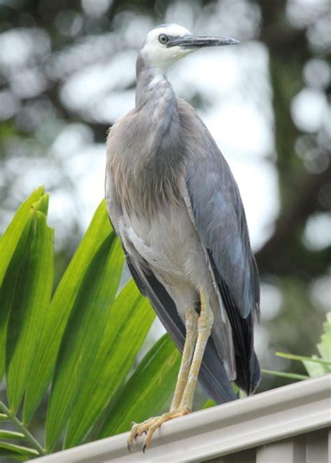 Avatar Petir avatar birds in backyards