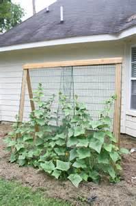 build a garden trellis breed farms building a cheap garden trellis