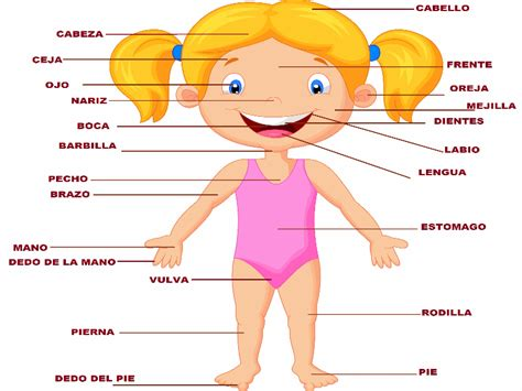 imagenes educativas cuerpo humano puzzle de cuerpo humano con sus partes de un ni 241 o