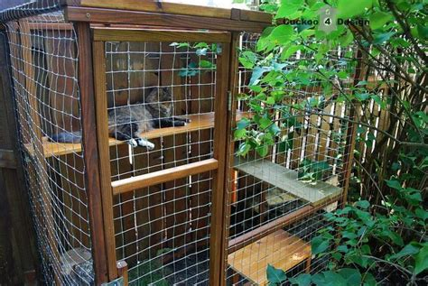 backyard cat enclosure diy outdoor cat enclosure