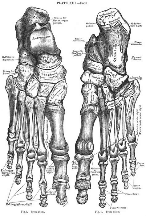 We have so many bones in our feet. We must look after them