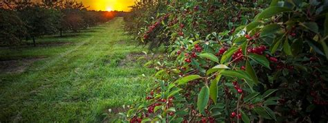 Cherry Season Door County by Kettle Range Local Grass Fed And Pastured Meats