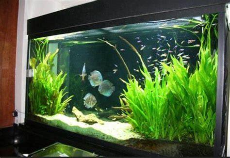 aquarium landscaping ideas  android apk