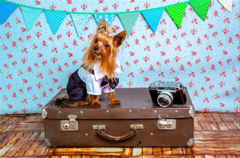 Book Your Travel To Dreamland Pet Pet Pet Product by How To Travel With A On A Plane Successfully