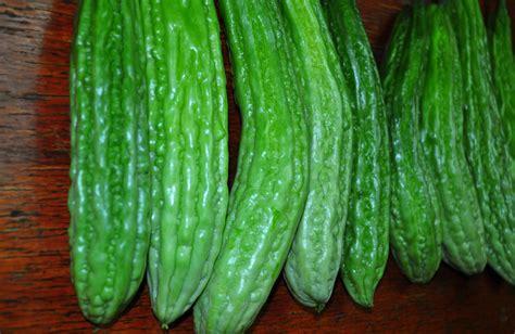 organic ampalaya flickr photo sharing