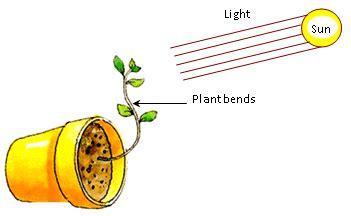 tropic movements in plants plant movements