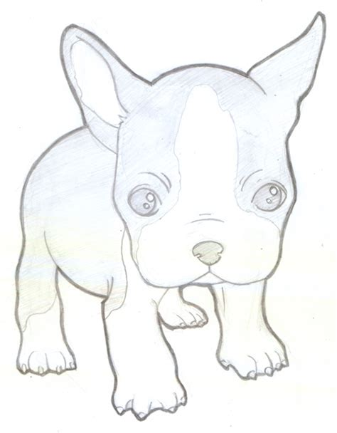 cute boston terrier coloring pages coloring pages