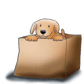 puppy in a box dogs