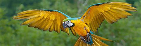 imagenes animales que vuelan 161 a volar primera de dos partes