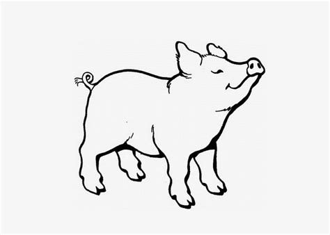 coloring page of a baby pig baby pigs coloring pages