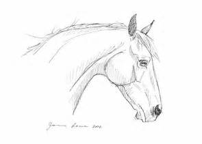 horse drawing quot head study quot pen and ink flickr photo