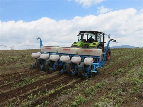 natal farmer has success with planting canola with his