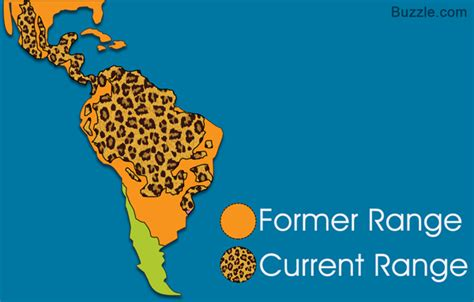 what state are the jaguars from captivating facts about the food jaguars eat and their habitat