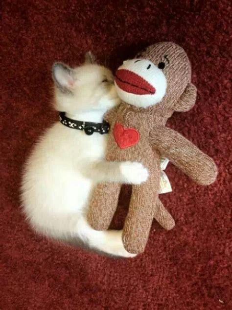 sock monkey cat cat hugs sock monkey sock monkey