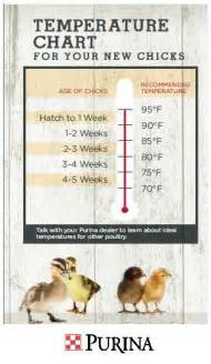 alternative to heat l for chickens 17 best images about quail pheasants on pinterest