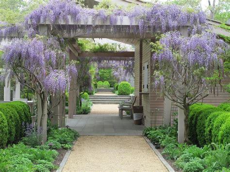 plant   week wisteria gardenista
